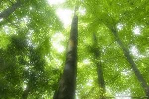 新緑の森BGM